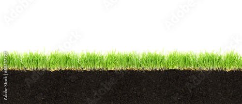 Photo sur Toile Herbe Cross-section of soil and grass isolated on white background