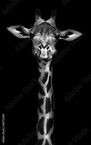 Deurstickers Giraffe Giraffe in Black and White