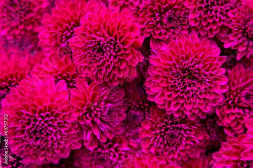 Foto Bouquet of magenta dahlias.