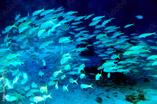 Tuinposter Onder water Coral fish in blue water.