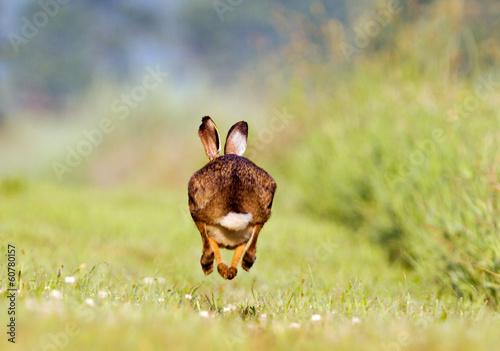 Carta da parati Running Hare