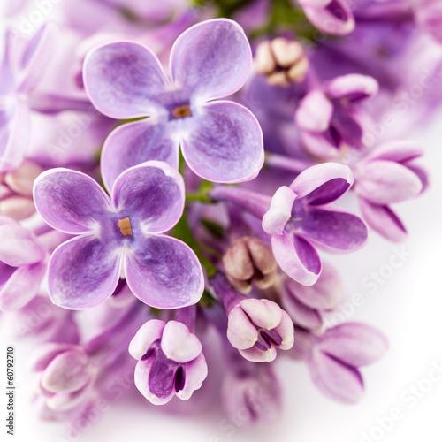 tlo-kwiatowy-kwiaty-bzu