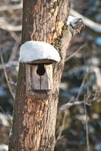 Bird House. Booth Breeding On Tree