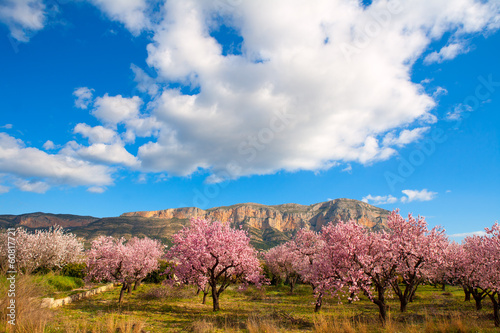 Mongo in Denia Javea in spring with almond tree flowers Fotobehang