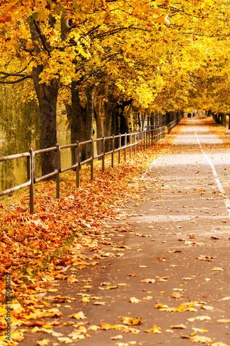 Foto op Canvas Herfst autumn park