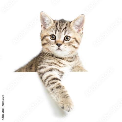 Fotobehang Kat Cat or kitten isolated on white