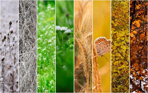 Fotografie, Tablou  Four seasons collage: Winter, Spring, Summer, Autumn.