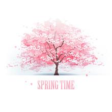 桜 木 Beautiful Cherry Blossom Tree