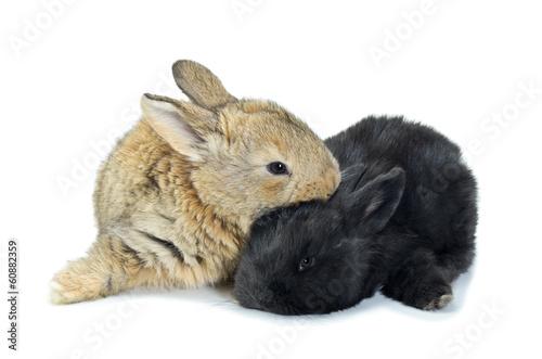 Fototapeta Młode króliki obraz