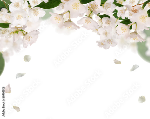 Stampa su Tela half frame from pure jasmin flowers isolated on white