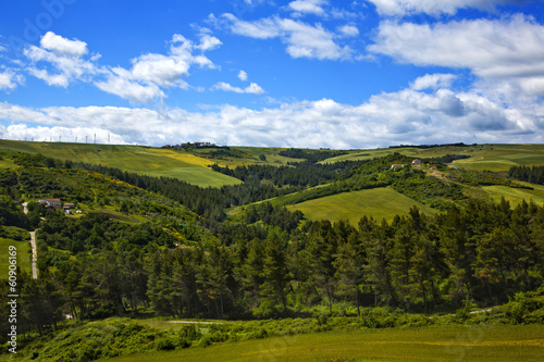 Trees on a hill Canvas Print