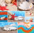 Collage of summer seashells