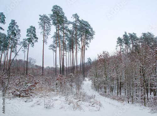 Papiers peints Foret brouillard Winter forest