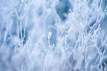 Frosted Grass And Plants In Winter