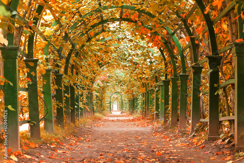 a Garden at Autumn