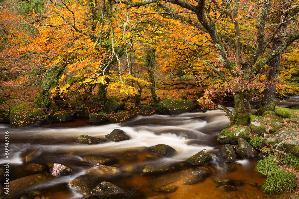 Fototapeta River Dart Dartmoor Devon Uk
