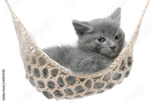 Keuken foto achterwand Kat Cute gray kitten lying in hammock.