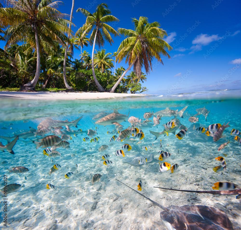 Fototapeta Tropical island