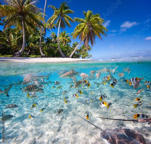 Naklejki na parawan nawannowy   tropikalna-wyspa