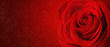canvas print picture - beautiful close up red rose