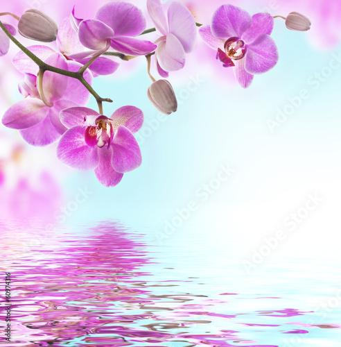 galaz-rozowych-storczykow-nad-woda