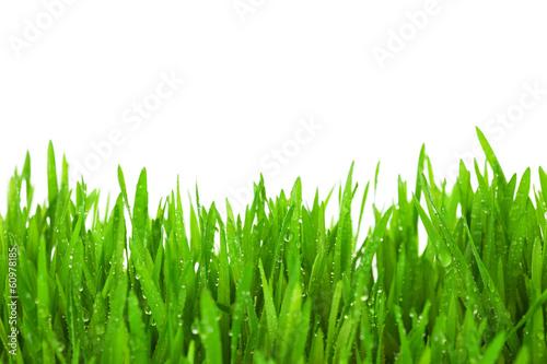 Naklejka na szybę Świeża zielona trawa na białym tle