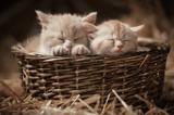 Dwa śpiące kociaki w wiklinowym koszyku