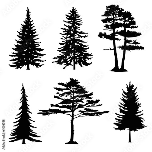 Fotografija  coniferous trees silhouettes, collection
