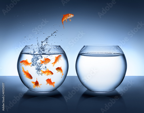 goldfish jumping - improvement and career concept Wallpaper Mural