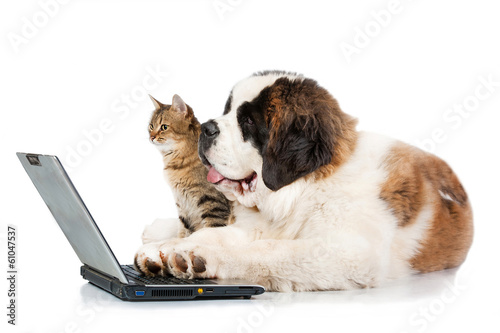 Saint bernard puppy with tabby cat in front of a laptop Tablou Canvas