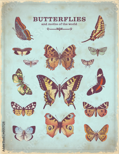 Foto op Canvas Vlinders in Grunge vintage placard with colorful butterfly illustrations