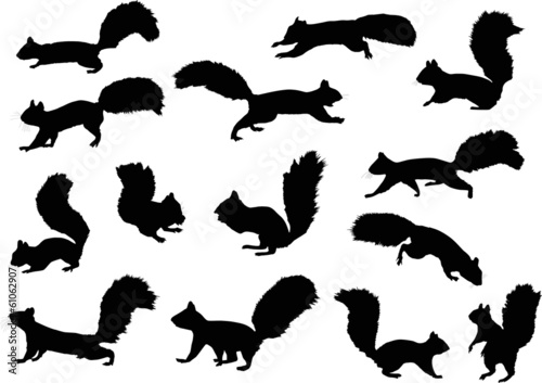 fourteen squirrels isolated on white Poster