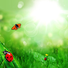 Sunny Green Field With Ladybug...