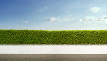 Panoramic View Of Green Hedge Fence With Blue Sky