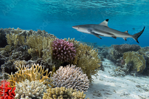 Poster Sous-marin Colorful underwater coral reef with yellow stripped fish and big