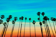 California Sunset Palm Tree Ro...