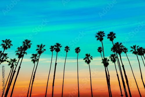 Photo  California sunset Palm tree rows in Santa Barbara