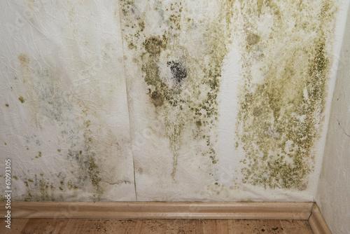 Fotografie, Obraz  Mildewed Walls