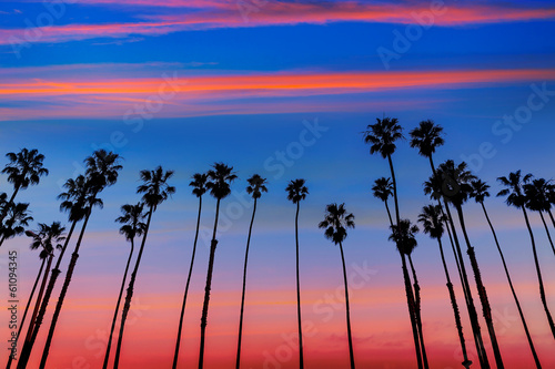 Cadres-photo bureau Palmier California sunset Palm tree rows in Santa Barbara