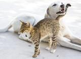 Fototapeta Zwierzęta - Kot i pies