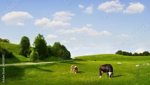 Obraz na płótnie eco pasture