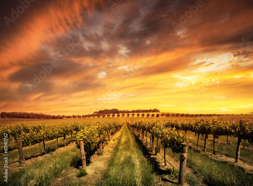 Foto op Plexiglas Zuid Afrika Morning Vines
