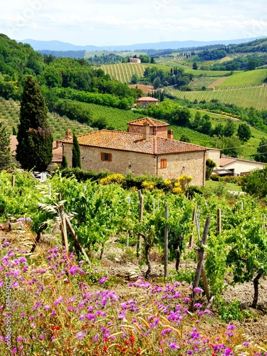 Deurstickers Toscane View through vineyards with stone house, Tuscany, Italy