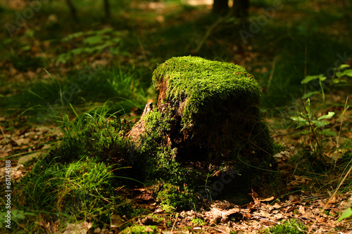 Fotografie, Obraz  stump with moss