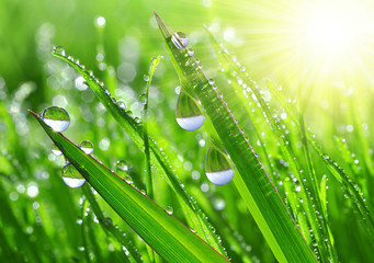 Obraz na Plexi Fresh grass with dew drops close up