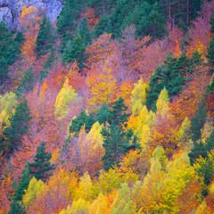 Fototapeta samoprzylepna jesienny las w Pirenejach, Hiszpania
