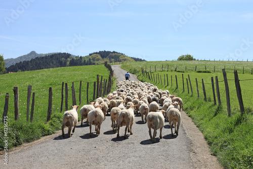 Fotografia ovejas rebaño pastor país vasco 1749-f14
