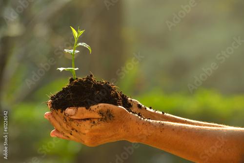 Fotobehang Planten Hands holding a green young plant.
