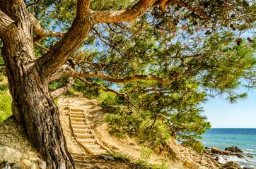 FototapetaSpreading tree on the beach