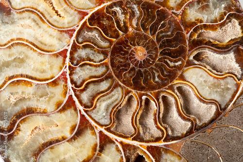 Beautiful ammonite mineral Canvas Print